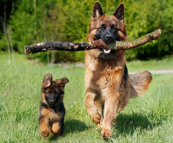 Hundefutter für Allergiker von sanoro.de
