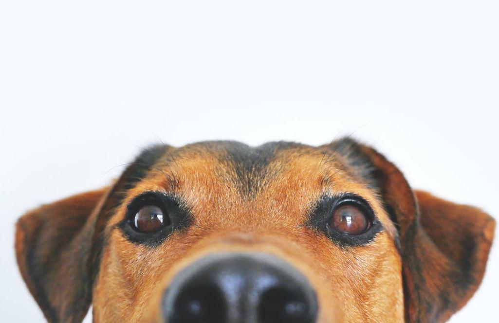 Hundekissen XXL für Vierbeiner